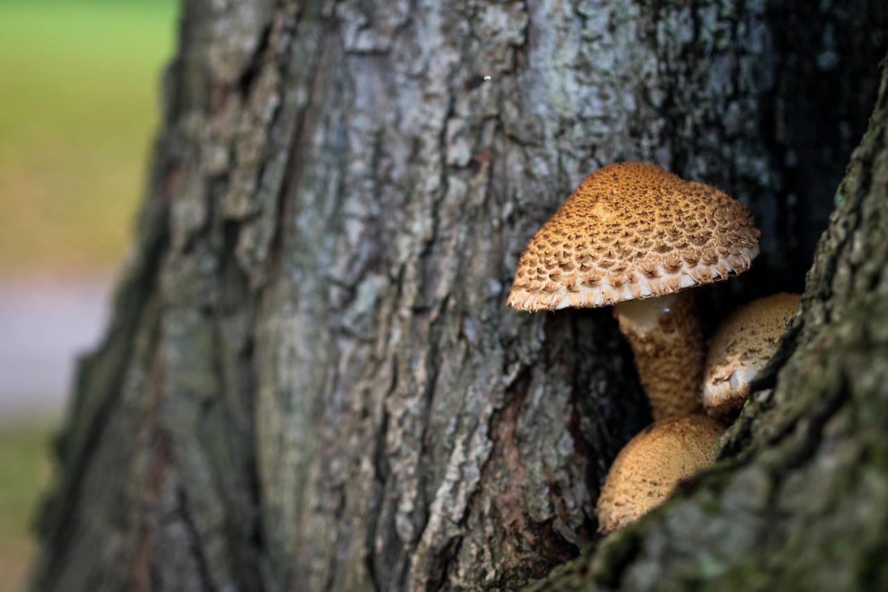 frysning af svampe