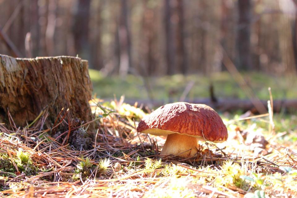 rengøring af svampe