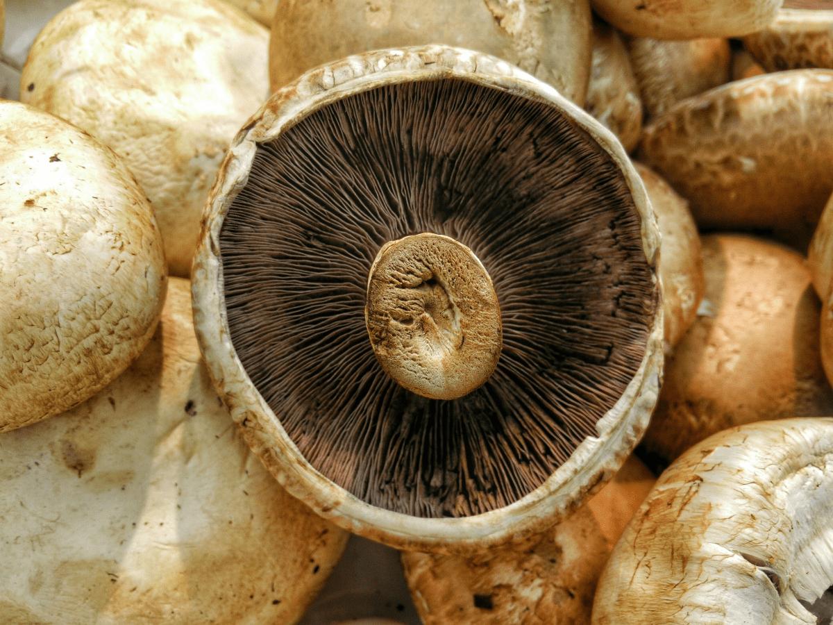 kan champignon fryses
